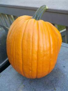 Great Pumpkin