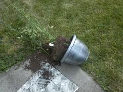 Twenty pound tomato planter blown off the corner of the deck railing.