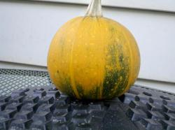 Possible 8-BallPossible Pumpkin