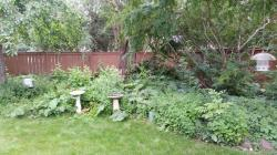 The weedy back yard. There are five tomato cages hidden in there somewhere
