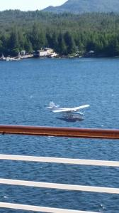 As we were docking, one of these landed between the boat and the dock