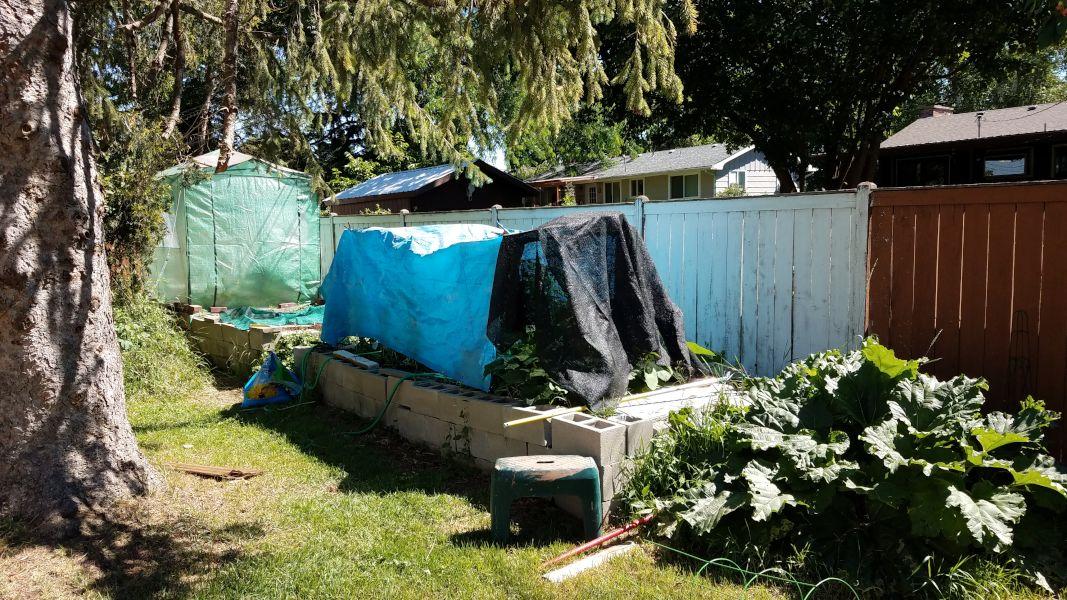 GardenShade2021-06-28 10